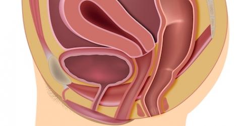 Descente d'organe